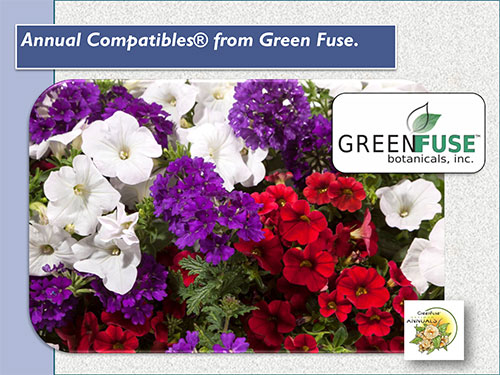 GREEN-FUSE-COMPATIBLES-ANNUAL-MIXES2-19-1