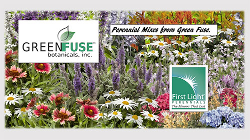 GREEN-FUSE-FIRST-LIGHT-PERENNIALS-MIXES2-19-v2--1