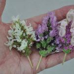 Lavender Madrid Lavish Series