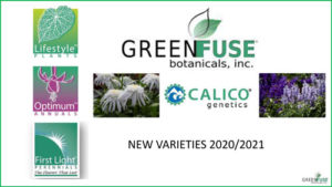 GREEN-FUSE-NEW-VARIETIES-2020-21-cover