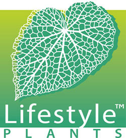 Lifestyle_sm2