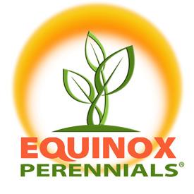 equinox-Perrenial_sm